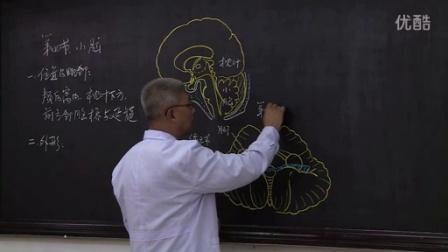 系统解剖学9-4