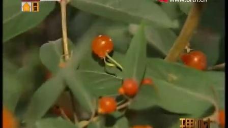 荷兰布尔玛国际花艺学院参加北京电视台东方花道进社区栏目录制