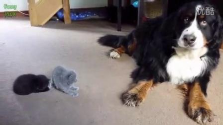 看看狗狗是泡猫咪的!  - YouTube