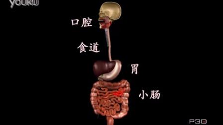 食物在人体内的旅行