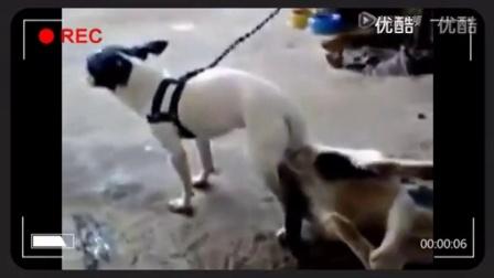 【猫,狗交配,世间少见】