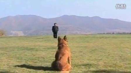 唐伟敏训狗教程下载_新概念训狗教学_怎么样训练马犬