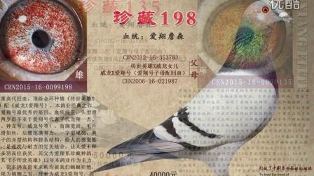 凤凰男鸽舍视频相册