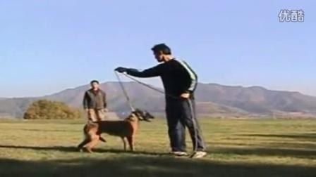 怎么训练狗狗听话-怎么训练狗狗服从主人的命令
