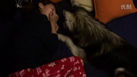 多太狼和他的女朋友#暴虐单身狗#