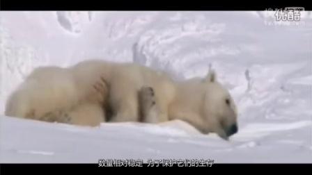 TOP10大百科:全球十大濒临灭绝的动物[高清版]