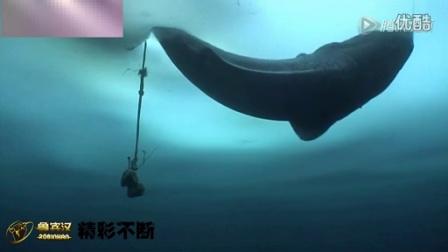 两名爱斯基摩人凿冰捕获大鲨鱼 不得不赞!