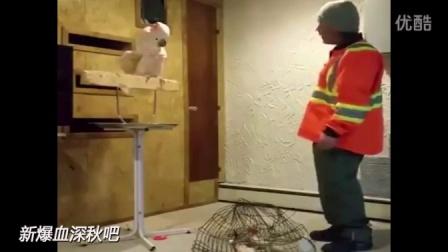 主人捣毁了鹦鹉的笼子,鹦鹉怒了!破口大骂......