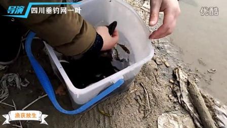 四川垂钓网一叶渔获放生