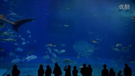 冲绳okinawa美丽海水族馆 2016