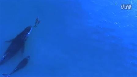座头鲸麻麻和海豚麻麻带着宝宝在交流育儿心得