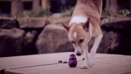 Busy Buddy益智玩具——聪明的狗狗,有趣的视频!