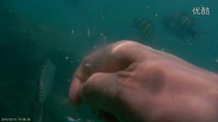 割喉岛hong岛浮潜01