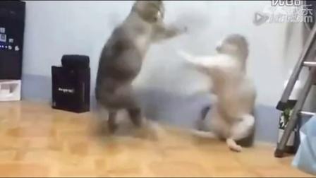 搞笑 动物 猫打架1461596452429