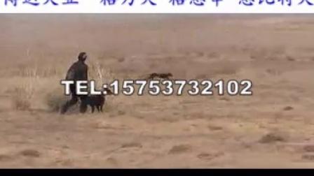 开封哪里有卖赛道格力犬的养殖场