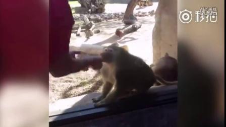 游客表演把手中的纸牌变没,第一次看魔术的猴哥震惊了,反应夸张:我的天哪?!有这么神奇吗?