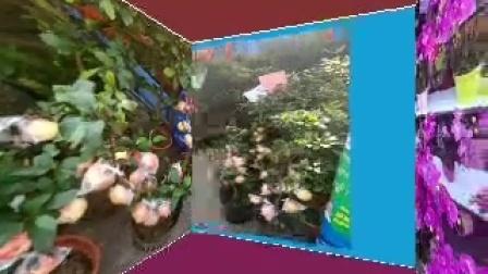 示例相册-3D 空图库间   美丽的花卉   2(美影美视App制作)