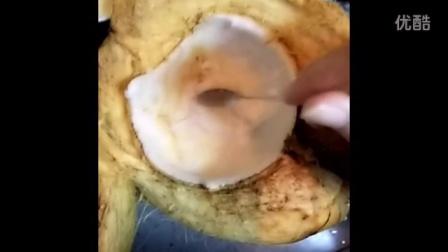 [试毒]到底是椰子蛋糕还是水果馅儿饼