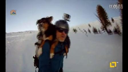伯恩山犬 滑雪