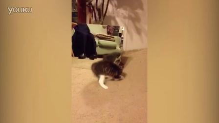 呆萌可爱的小猫咪第一次看到镜子中的自己