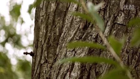 21cake食材之旅-800年栗子树