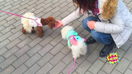 【火龙果的日常】麻麻带火龙果和饭团弟弟去公园散步