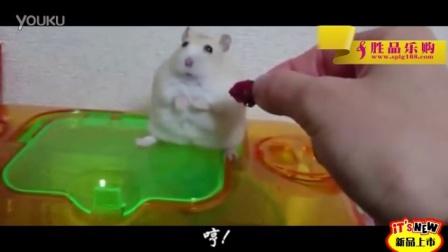 小白鼠不食嗟来之食