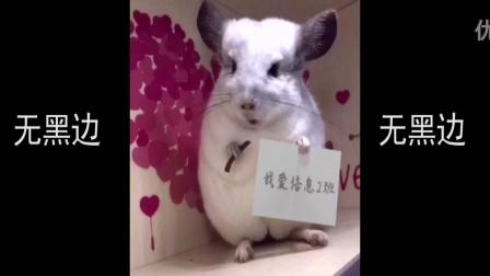 龙猫举牌 龙猫视频 龙猫举牌照 猫咪 宠物举牌照 QQ963308516 定制小视频