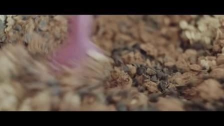 日本人气零食calbee卡乐比麦片制作-可可口(一)