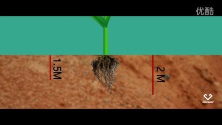 玉米种植技术动画(01)