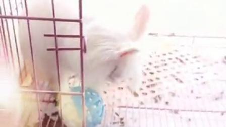 This rabbit name is Tepero.