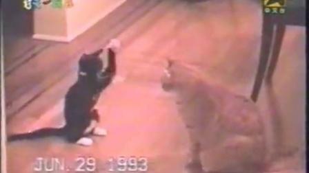 搞笑-催眠貓-搞笑视频搞笑经典爆笑视频集锦