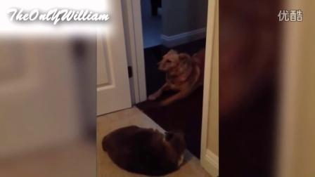 【怪咖搞笑】什么叫真正的怂成狗