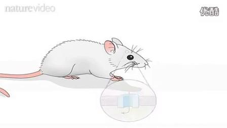 光遗传学技术_标清
