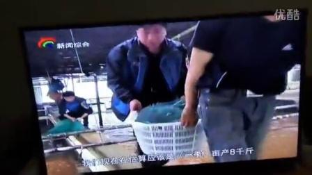 EC18生物絮团养殖模式养虾视频1