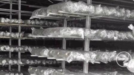 如何生产银耳菌种