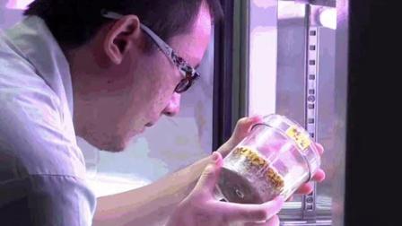 食用菌诱变育种方法