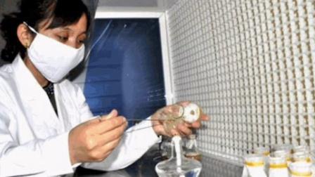 食用菌新技术食用菌菌种脱毒技术