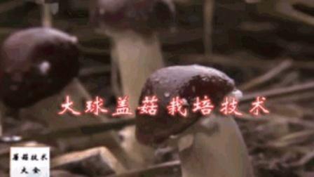 菇菌入门培训食用菌制种新技术