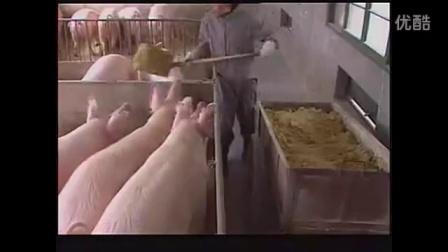 养猪技术视频全套技术_高清