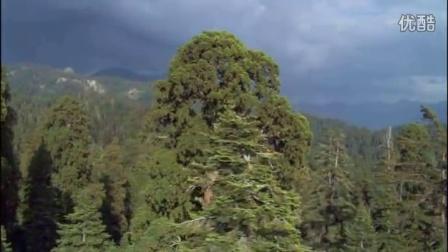BD49.实拍森林丛林雨林原始森林视频素材(15)
