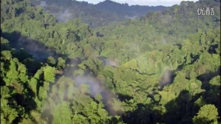 BD48.实拍森林丛林雨林原始森林视频素材(14)