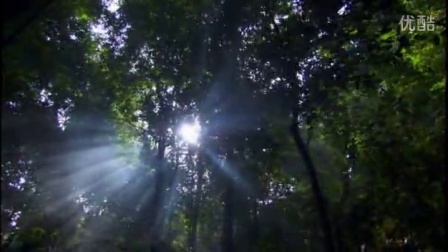 BD34.实拍森林丛林雨林原始森林视频素材