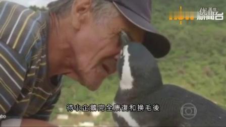 【爱家小哥】爱分享之《以身相许的企鹅》