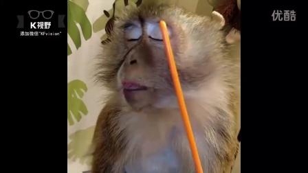 [K分享] 超爱美的小猴子~