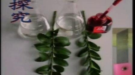 植物茎的输导功能-常州市西林实验学校