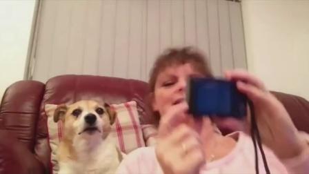 【发现最热视频】很有镜头感啊!一只会自拍的汪星人