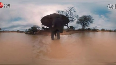 【Discovery探索频道VR广告 】360度动物世界Fight_标清