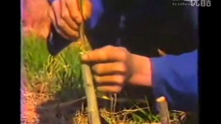 核桃种植栽培技术-农村创业致富项目