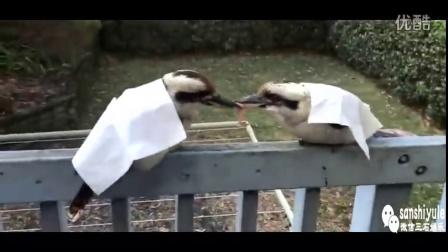 两只鸟为一块肉死磕到底,再给多少都不要,已经不是肉的问题了,是作为鸟的尊严